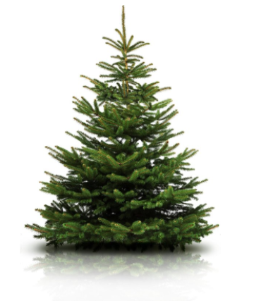 https://www.kingpicknicktafels.be/foto/kerstboom-nordmann.png