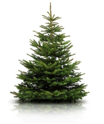 <BIG><B>Nordmann kerstboom 150 tot 175 cm</B></BIG>