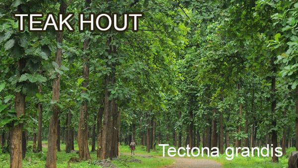 teak woud